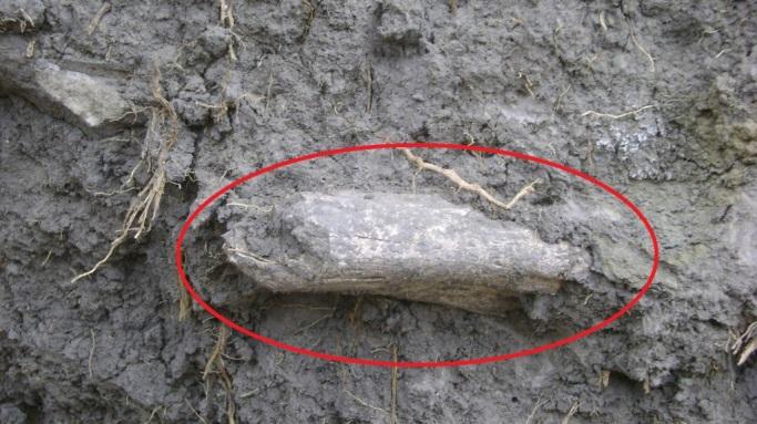 Fragmentos óseos abandonados. Foto Henry Barbosa. (Dar click para ampliar).