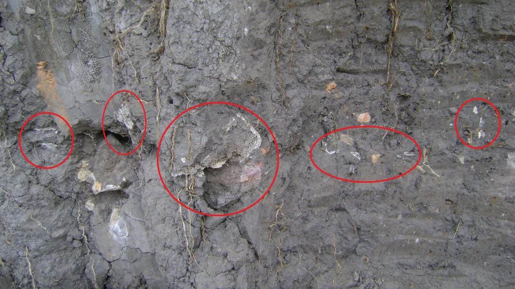 Partes de restos óseos humanos destruidos por las retroexcavadoras. Foto Henry Barbosa. (Dar click para ampliar).