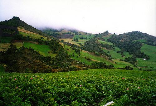 Las montanas de Cogua, la tierra de la papa.
