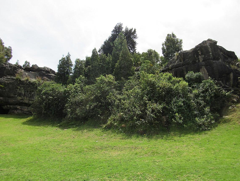 Este estudio contiene el primer conteo forestal que se realiza en el parque arqueológico.