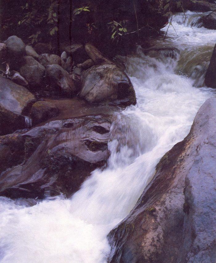 'Yo protejo, agua para todos', la estrategia para conservar el recurso hídrico