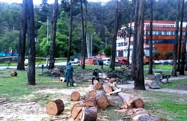 Por tala de árboles abren indagación preliminar a la Alcaldía de Bogotá