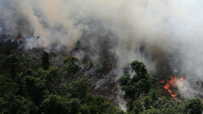 """Incendios forestales en la selva amazónica son un """"crimen contra la humanidad"""""""
