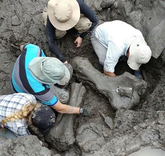 Tecnología avanzada será utilizada en hallazgo paleontológico de Anolaima