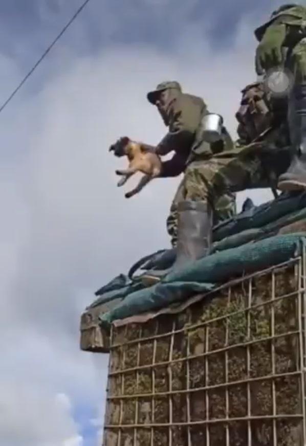 Maltrato animal en batallón del Ejército colombiano