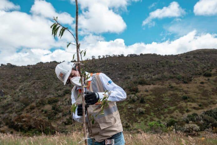 Proyecto Tercer Carril Bogotá–Girardot avanza en su compensación ambiental con más de 3.300 árboles nativos sembrados