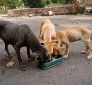 Gobernador Nicolás García aboga por la protección y cuidado de los animales de compañía