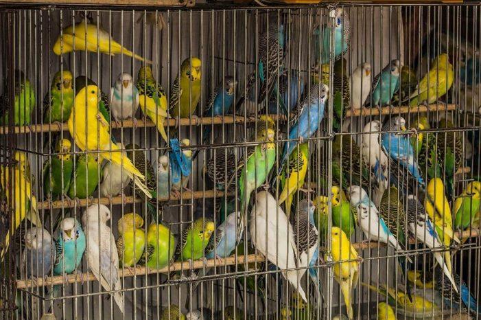 Fiscalía intensifica acciones contra el tráfico y consumo de animales silvestres en Semana Santa