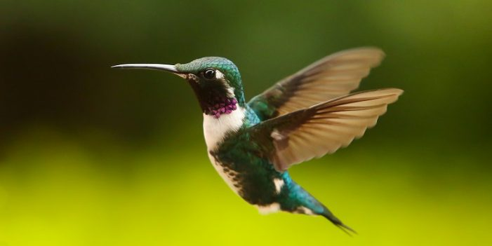 """La belleza de los colibríes llega con """"Quynza Magia Ancestral"""""""