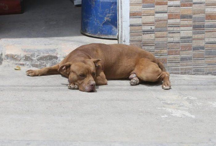 Mano dura contra un hombre por maltrato animal en Soacha