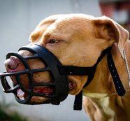 Dueños de perros potencialmente peligrosos deben tener póliza o pueden ser multados