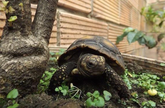 Autoridades ambientales devuelven a su hábitat más de 1.900 animales rescatados