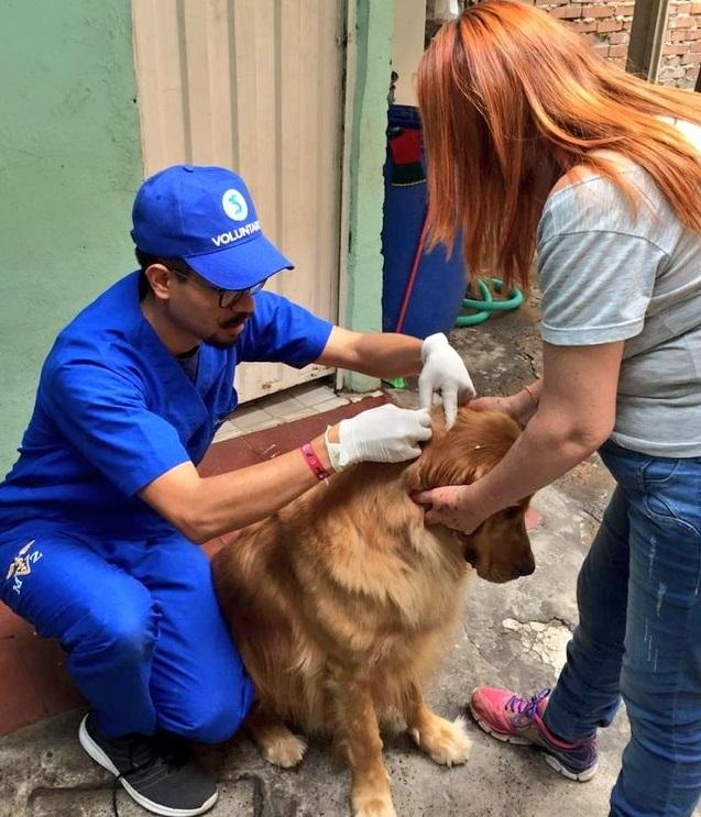 Gobierno Nacional inmunizará un millón de mascotas para evitar la rabia silvestre, enfermedad mortal