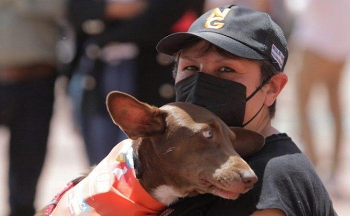 Gobernación de Cundinamarca presentó Unidad Quirúrgica Móvil para animales